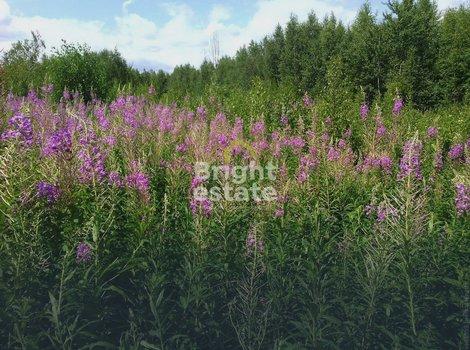 Купить земельный участок 25 соток в СНТ Росинка. ID 12063
