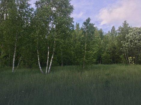Купить земельный участок 10 соток в поселке Иславское. ID 4379