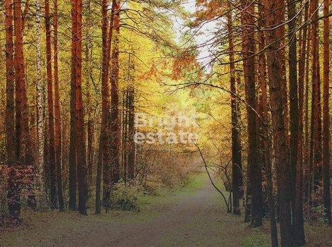 Купить лесной участок в коттеджном поселке Балатон на Рублевке. ID 9880
