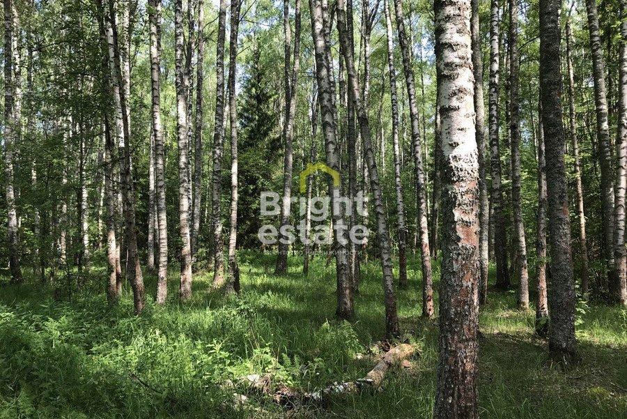 Лесной земельный участок в загородном поселке Вымпел. ID 13834